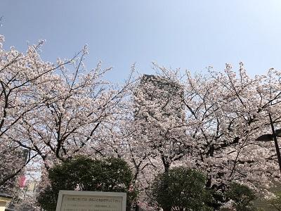 花見アイキャッチ